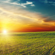 Beautiful sunset over green field - Stock Photo