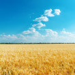 Golden wheat field and blue sky with clouds — Stock Photo