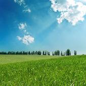 Green fields under cloudy sky — ストック写真