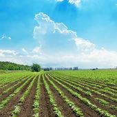 Blauwe hemel over lente veld — Stockfoto