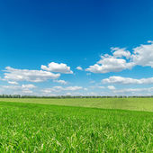 Green fields and cloudy sky — Stock Photo