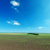 Field with little shot and blue sky — Stock Photo