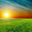 Good sunset over green grass - Stock Photo