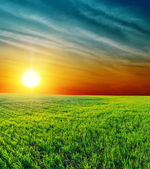 Good sunset over green grass — Stock Photo