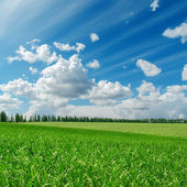 Green grass under cloudy blue sky — Stock Photo