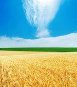 Goldene gerste und blau bewölktem himmel — Stockfoto