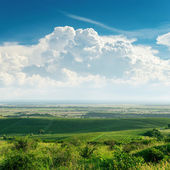Clouds over green vineyard — Stock Photo