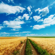Road in golden fields under cloudy sky — Stock Photo