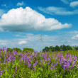 Flowers in green grass under clouds - Stock Photo