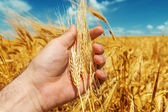 Good harvest in farmers hand — Stockfoto