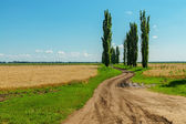 Dirty road in agriculture fields — Stock Photo