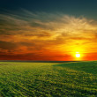 Royalty-Free Stock Photo: Good sunset and green grass