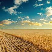 Solnedgång över vete fält — Stockfoto