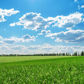 Green fields and blue cloudy sky — Stock Photo