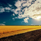 Sunset and field with harvest — Stock Photo