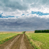 Rural road in green field under cloudy sky — Stock Photo