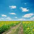 Dirty road in sunflowers under blue cloudy sky - Stock Photo