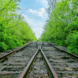 Crossing of two railroads in green wood - Stock Photo