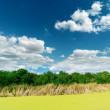 Green swamp on sunny day under clouds — Stock Photo