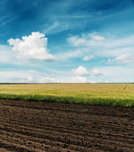 Black plowed and green fields under cloudy sky — Stock Photo