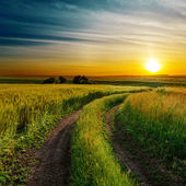 Good sunset and dirty road in green spring field — Stock Photo