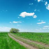 Route sale dans le paysage verdoyant — Photo