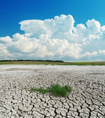 Drought earth with green grass under clouds — Stock Photo