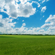 Agricultural green field and cloudy sky — Stock Photo