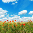 Royalty-Free Stock Photo: Red poppies on field and clouds over it