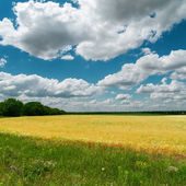 Dramatic clouds over fields — Stock Photo
