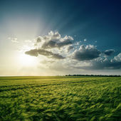 Dramatic sunset over green field — Stock Photo