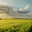 Stock Photo: Sunset over green field