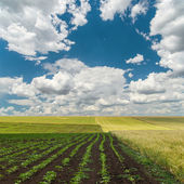 Cloudy sky over spring field — Stock Photo