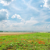 Cloudy sky over green field with poppies — Stock Photo
