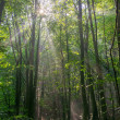Forest in fog with sun — Stock Photo