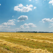 Straw in windrows under cloudy sky — Stock Photo