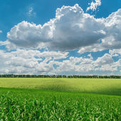 Green agriculture field under cloudy sky — Stock Photo