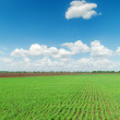 Green field and dlue sky — Stock Photo