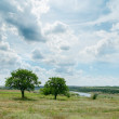 Two trees in green landscape under cloudy sky — Stock Photo