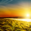 Sunset over green field near river — Stock Photo