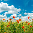 Green field with red poppies and cloudy sky — Stock Photo
