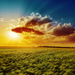 Agriculture green field and orange sunset — Stockfoto