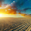 Ploughed field and sunset — Stock Photo