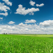 Green grass field and deep blue sky with clouds — Stock Photo