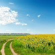 Rural road in field with sunflowers and blue sky — Stock Photo