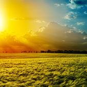 Sunset over green field — Stock Photo