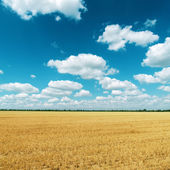 Golden field after harvesting and clouds on deep blue sky — Stock Photo