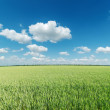 Green field and clouds on blue sky — Stock Photo