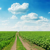 Road in green field under cloudy sky — Stock Photo