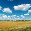 Rural landscape under cloudy sky — Photo